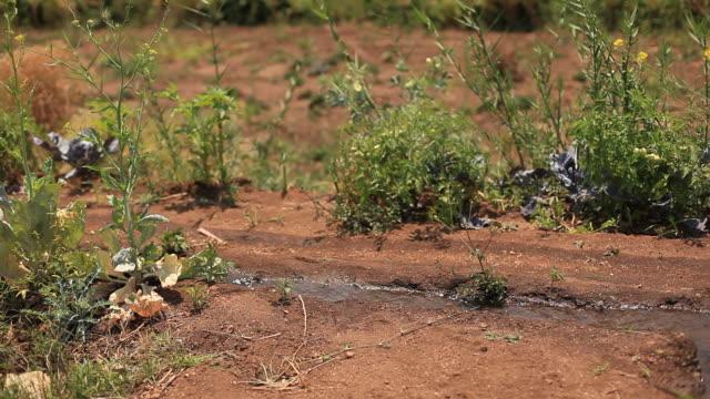 vídeos y material grabado en eventos de stock de corriente de agua, regar las plantas en la granja - equipos de riego