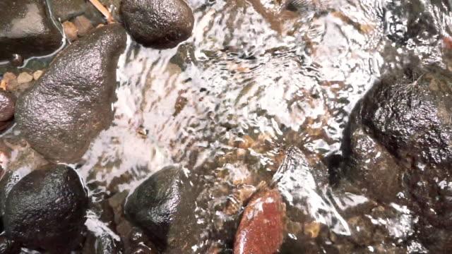 vídeos de stock, filmes e b-roll de water stream on the shallow river of tropical forest - pedra solta
