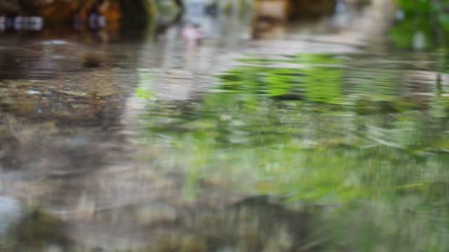 ウォーター・ストライダーズ、池のスケーター - リフレクション湖点の映像素材/bロール