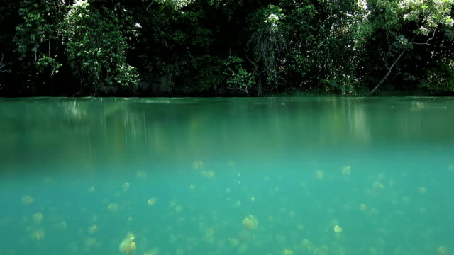 water surface of jellyfish lake, palau - lake stock videos & royalty-free footage