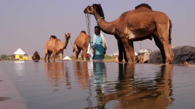 A water tank build specifically for the camels at the the Pushkar Cattle Fair, Rajasthan
