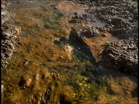 water trickles over mineral deposits in a hot spring. - 水の形態点の映像素材/bロール