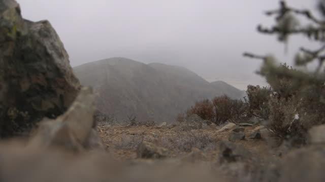 Water vapour rises behind mountain vegetation in the Atacama Desert, Chile.