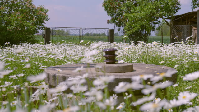 SLO MO DS Water well in the garden full of daisies