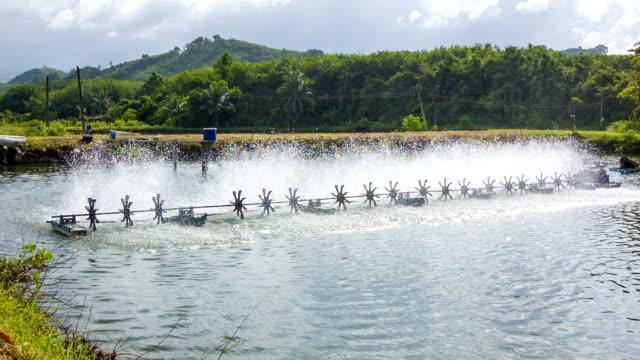 water wheel in prawn farm