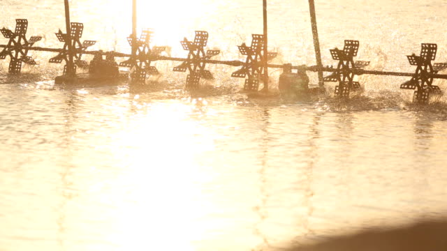 water wheel in shrimp farms. - prawn animal stock videos and b-roll footage
