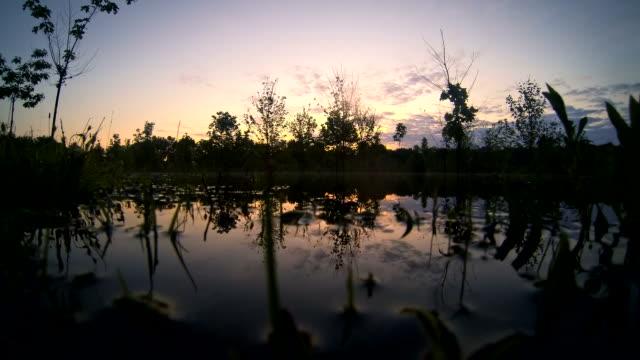 water with blue sky sunrise timelapse - gruppo medio di animali video stock e b–roll
