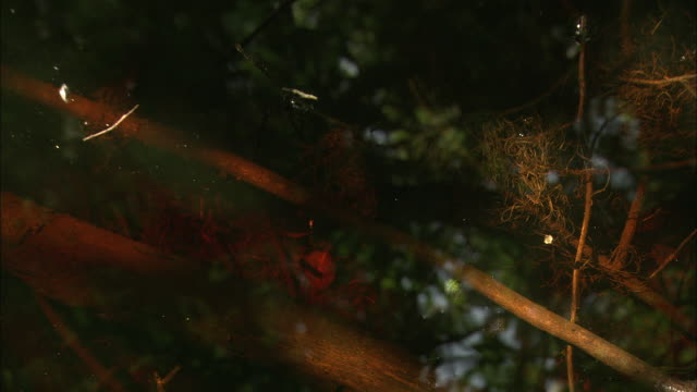 waterbugs skate on top of the okefenokee swamp. - okefenokee national wildlife refuge stock videos and b-roll footage