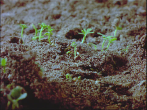 watercress germinating - crucifers stock videos & royalty-free footage