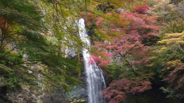 waterfall and colorful autumn maple leaves background at momiji japan. - blossom stock videos & royalty-free footage