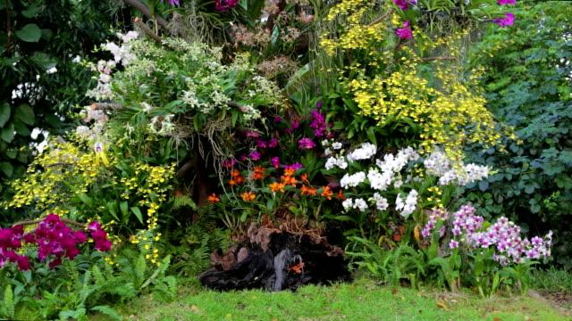 vidéos et rushes de cascade et orchidée park - parterre de fleurs