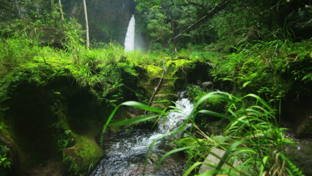 Waterfall and river cut through lush green jungle