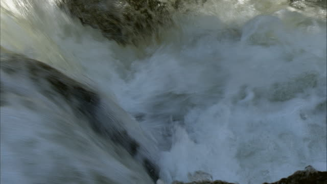 waterfall climbing of salmon closeup  kinkomanai falls - persistence stock videos & royalty-free footage