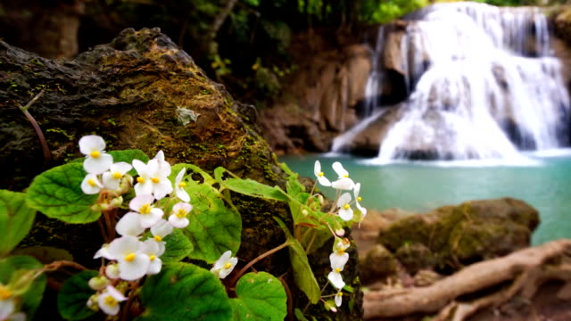 PR RF Waterfall flow standing with forest enviroment and Angel Wing Begonia flower