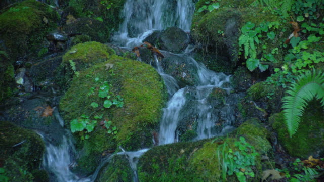 vídeos y material grabado en eventos de stock de a waterfall flows over mossy rocks in the forest. - olympic national park