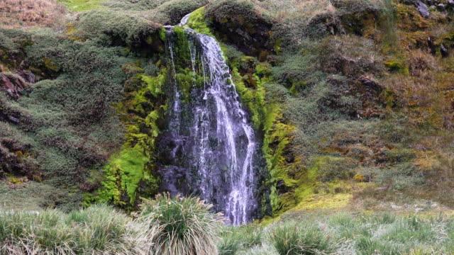 waterfall, fortuna bay, south georgia island, southern ocean - antarctic ocean stock videos & royalty-free footage