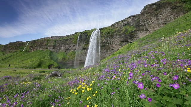 Waterfall , grassland and flower in blossom.
