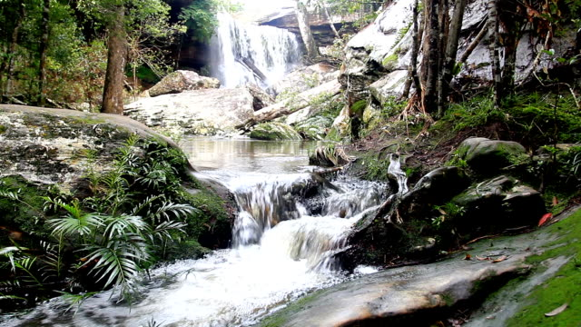 waterfall in a deep forest ( with sound)