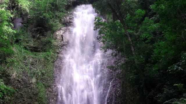 vídeos de stock, filmes e b-roll de waterfall in a rainforest - chão