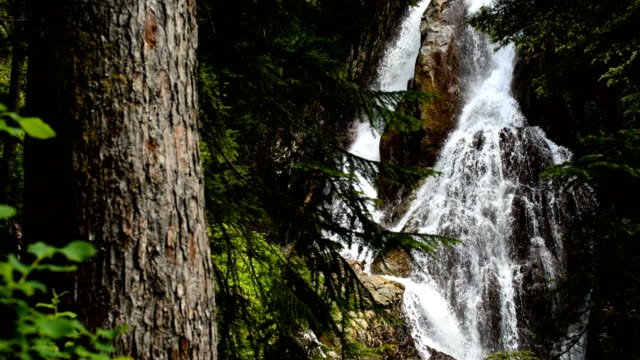 waterfall in an old growth forest - british columbia stock videos & royalty-free footage