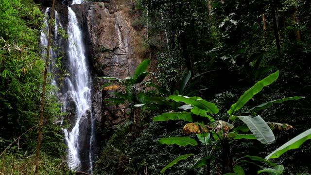 vidéos et rushes de cascade dans la forêt profonde - image