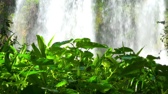 waterfall in 'el nicho' natural park in the province of sancti spiritus - eco tourism stock videos & royalty-free footage