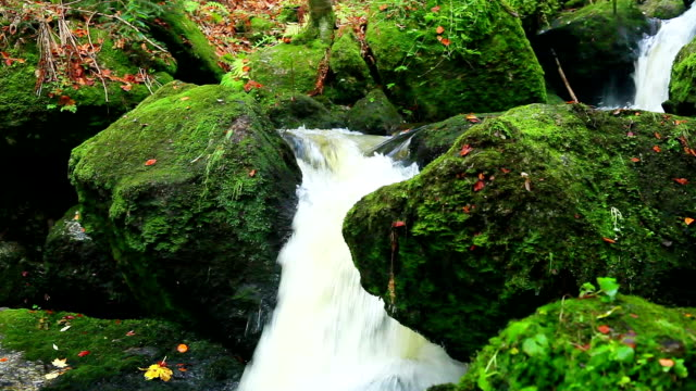 wasserfall im wald, dolly shot - boulder rock stock-videos und b-roll-filmmaterial