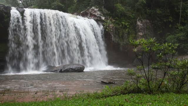 vídeos de stock, filmes e b-roll de cachoeira na floresta - árvore tropical