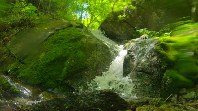 緑の森の滝/西沢渓谷 - 石点の映像素材/bロール