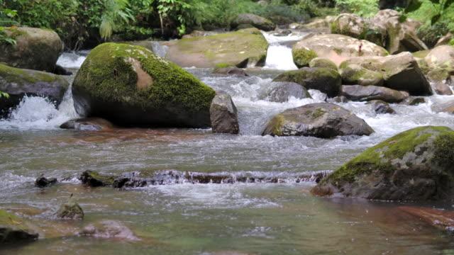 vidéos et rushes de chute d'eau dans la forêt verte, mouvement lent - vallée