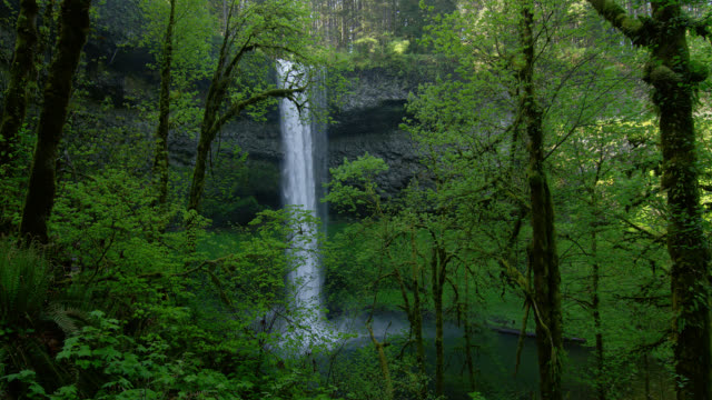 WIDE SHOT waterfall in lush green forest