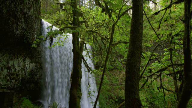 MEDIUM SHOT waterfall in lush green forest