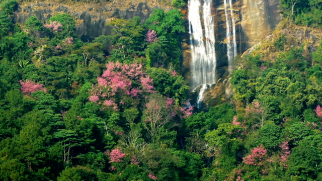 waterfall in spring pink cherry blossoms - satoyama scenery stock videos & royalty-free footage