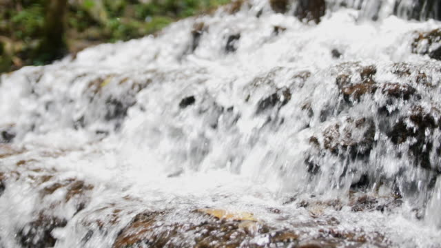 waterfall in the forest - piccolo video stock e b–roll