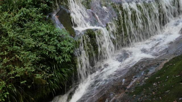 vídeos de stock, filmes e b-roll de cachoeira na floresta - curso de água