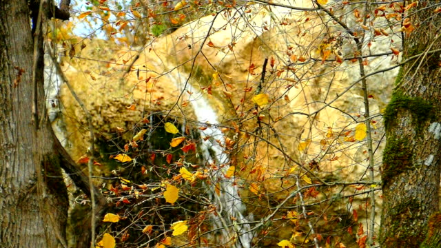 waterfall in the rocks autumn forest (slow motion) - copse stock videos & royalty-free footage