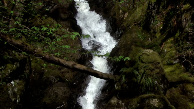 waterfall on a stream in rural scottish woodland - johnfscott stock videos and b-roll footage