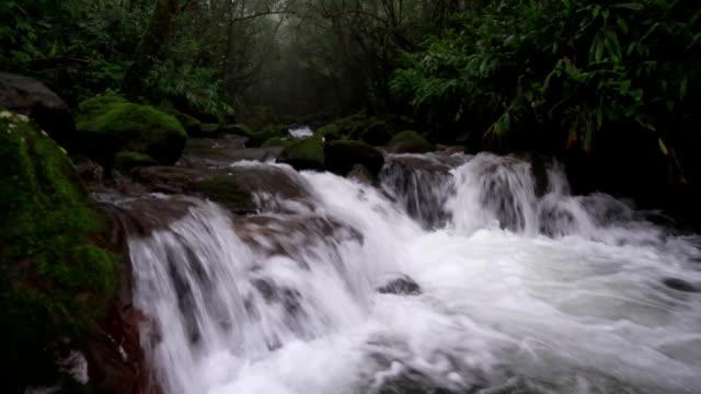 Waterfall rainforest
