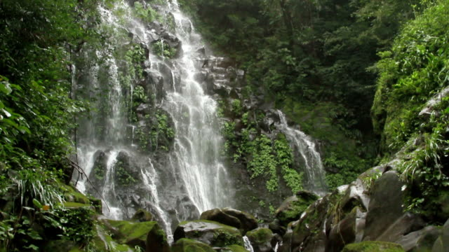 waterfall rainforest - biodiversity stock videos & royalty-free footage