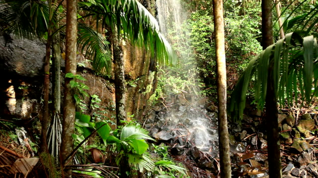 a waterfall spills into the vallee de mai palm forest in praslin, seychelles. - seychelles stock videos & royalty-free footage