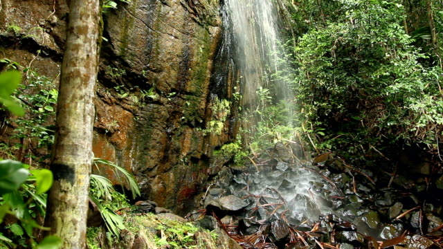 a waterfall splashes onto rocks in the vallee de mai palm forest in praslin, seychelles. - frische stock-videos und b-roll-filmmaterial