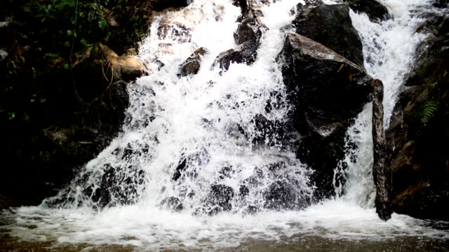 waterfall stream in the rain forest slow motion , nature footage background - cascata video stock e b–roll