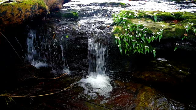 waterfall with moss and white flowers on the rocks - animals in the wild stock videos & royalty-free footage