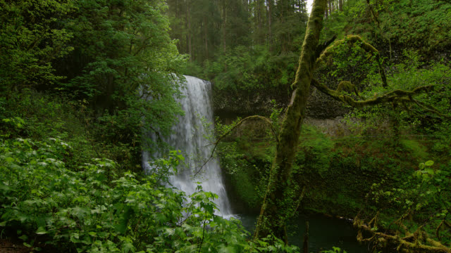 WIDE SHOT waterfall with mossy tree in foreground in lush green forest