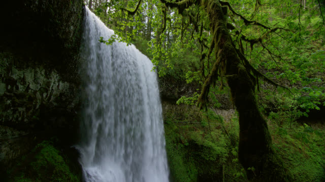 MEDIUM SHOT waterfall with mossy tree in foreground in lush green forest
