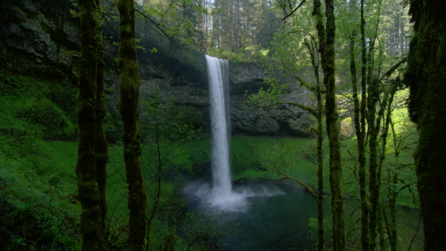 WIDE PAN waterfall with mossy trees in foreground in lush green forest