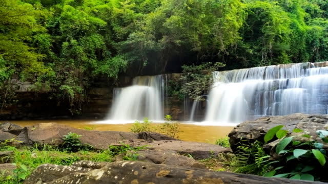 vidéos et rushes de des cascades. - arbre tropical