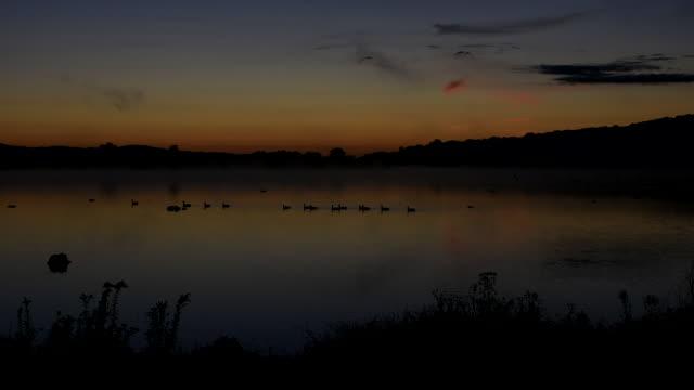 waterfowl on a lake at sunrise - vattenfågel bildbanksvideor och videomaterial från bakom kulisserna