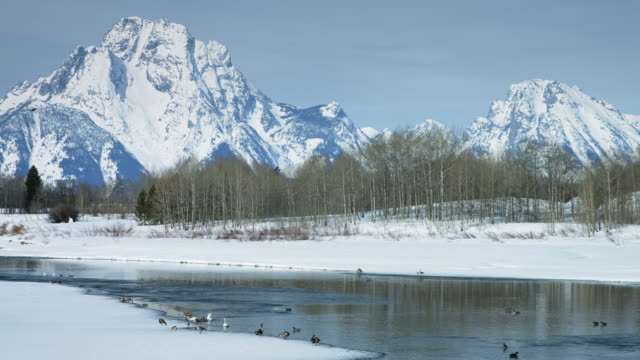 waterfowl on shores of snake river in grand teton national park - teton range stock videos & royalty-free footage