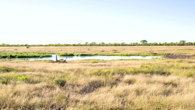 vidéos et rushes de ws plan d'eau dans la savane africaine - plan d'eau